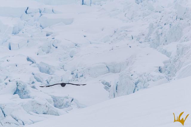 Antartida Sobrevolando