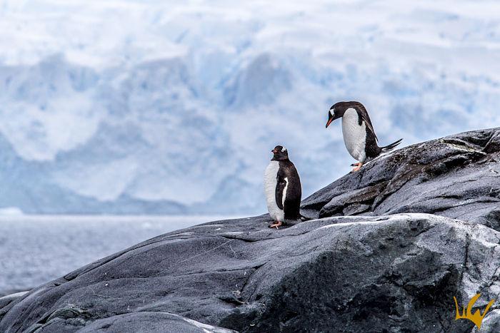 Antartida Pinguinos Paisaje