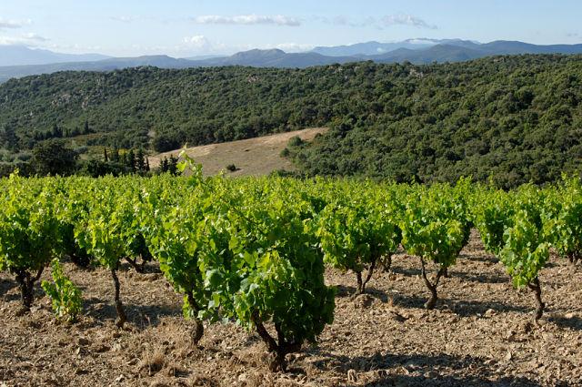 Vinedos Domaine Riberach